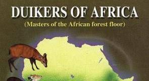 Duikers of Africa
