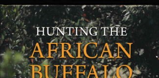 Hunting the african Buffalo